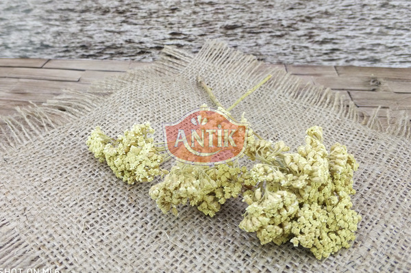 Dried Linden Flower 100 gr